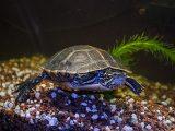 air-akuarium-kura-kura-berbusa