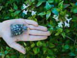 bermain-dengan-kura-kura