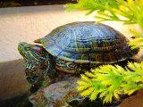 cara-memberi-makan-kura-kura