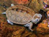 cara-membesarkan-kura-kura