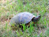 cara-memegang-kura-kura