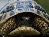 cara-mengawetkan-kura-kura