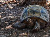 cara-mengobati-kura-kura-terluka