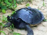 cara-merawat-kura-kura-byuku