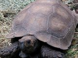 cara-merawat-kura-kura-emys
