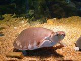 cara-setting-aquarium-kura-kura