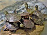 ciri-ciri-kura-kura-sehat