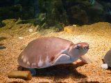 kandang-kura-kura-air