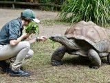 kelebihan-kekurangan-kura-kura