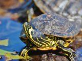 kolam-kura-kura-hijau