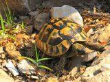 kuku-kura-kura-patah