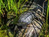 kura-kura-berada-di-daratan