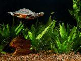 kura-kura-bersama-ikan