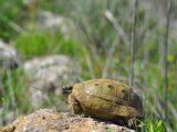 kura-kura-mau-makan-pelet