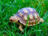 kura-kura-tidak-mau-makan