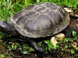 kura-kura-tidak-pemalu