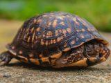 kura-kura-tidur-terus