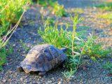 makanan-alami-kura-kura