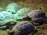 membuat-kandang-kura-kura