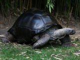 merawat-kura-kura-darat