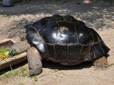 nafsu-makan-kura-kura-menurun
