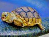 penyebab-kura-kura-keracunan