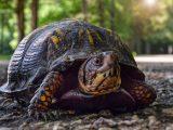 perbedaan-makan-kura-kura-darat