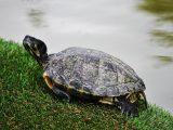 tempurung-kura-kura-berwarna-putih