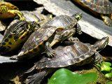 tips-membeli-kura-kura